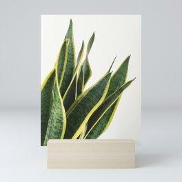 Sansevieria Mini Art Print