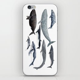 Whales and right whale iPhone Skin