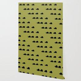 Angry Animals: Tortoise Wallpaper