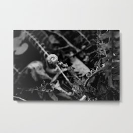 The Fiddlehead in Black and White Metal Print