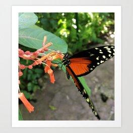Monarch at Peace Art Print