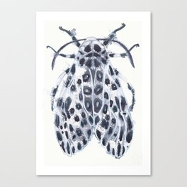 Eyed Tiger Moth Canvas Print