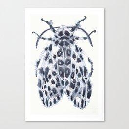 Eyed Tiger Moth Canvas Print