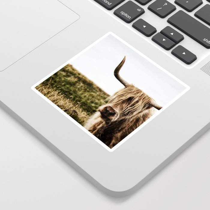 Highland Cow - color Sticker