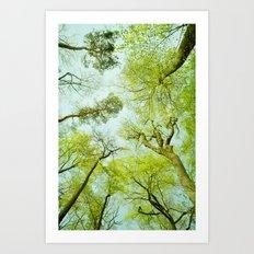 spring treetops  Art Print