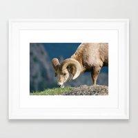 ram Framed Art Prints featuring Ram by David Todd