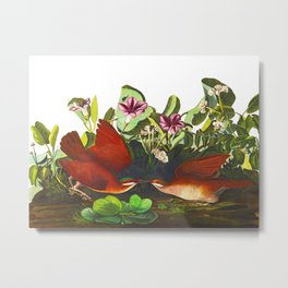 Key-west Dove Metal Print