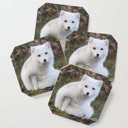 Polar Fox by Anne Elisabeth Coaster