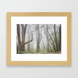 Garajonay National Park. Foggy Mistery Forest. la Gomera Framed Art Print