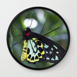 Cairns Birdwing Butterfly Wall Clock