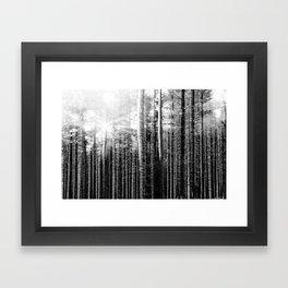 Forest V Framed Art Print
