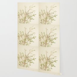 Waxflower Wallpaper