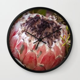 Feather Protea Wall Clock