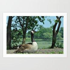 Deluxe Ducks #16 Art Print