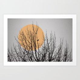 Birds and tree silhouette Art Print
