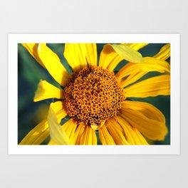 Horicon Marsh Sunflower Art Print