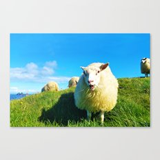 Sheeps in Iceland with Green Field Canvas Print