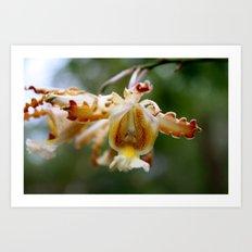Yucatan Orchid Art Print