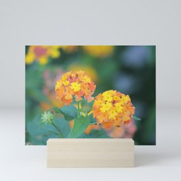 Pretty Sweet Floral Orange And Yellow Blossoms Mini Art Print