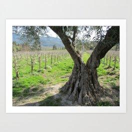 Olive tree in vineyard Art Print