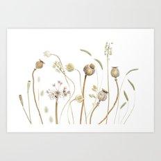 Pods and grasses Art Print
