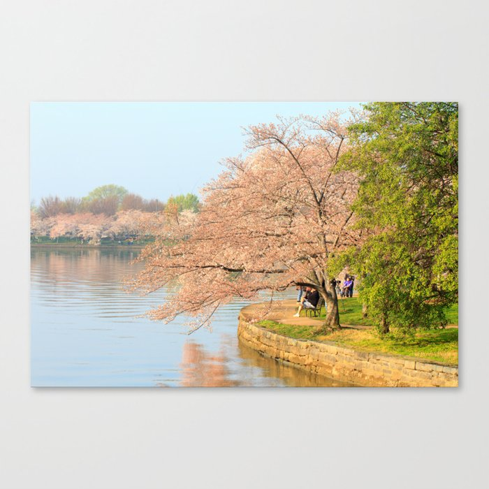 Cherry Blossoms on the water - Photos Canvas Print