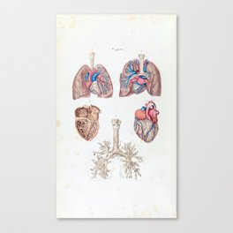 Vintage Anatomy of Human Heart and Lungs Canvas Print