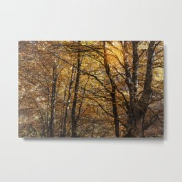 Forest in Autumn time Metal Print