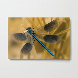 metallic blue Metal Print