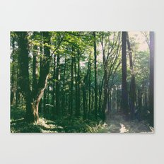 Forest Park Trees Canvas Print