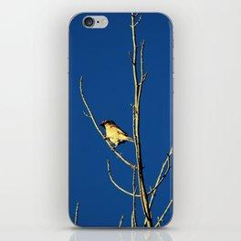 House Sparrow iPhone Skin