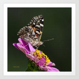 Butterfly Blossom Art Print