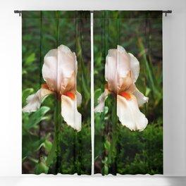 Orange and Pink Bearded Iris Blackout Curtain