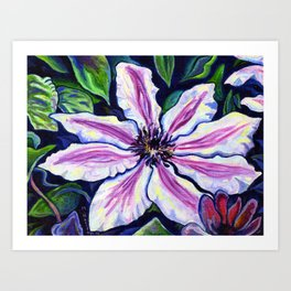 Nelly Moser (Clematis) Art Print