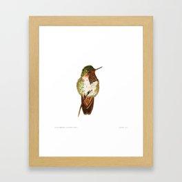 Volcano Hummingbird Framed Art Print