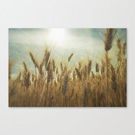 Near Harvest Canvas Print
