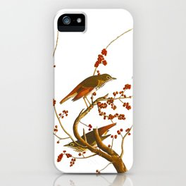 Hermit Thrush Bird iPhone Case