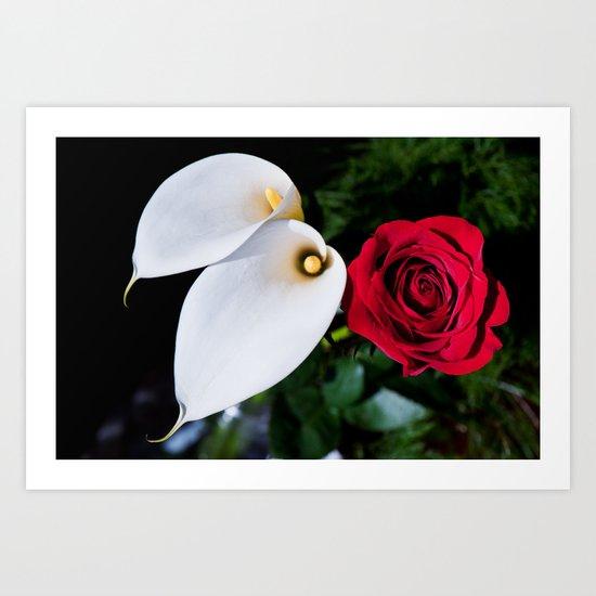Calla Lilies & Rose Art Print