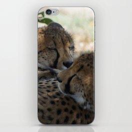 Sleepy Cheetahs iPhone Skin