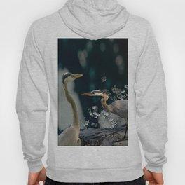 Great blue herons Hoody