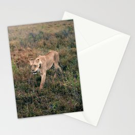 Lone Lion. Stationery Cards