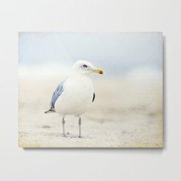 Seagull Beach Photography, Coastal Bird Jersey Shore Art, Blue White Seashore Birds Photo Metal Print