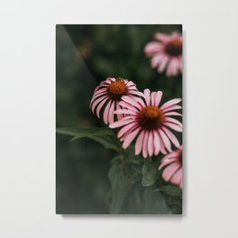 Pink echinacea flower moody vibe, nature print photograph photography Metal Print