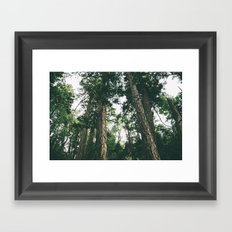 Forest XXVIII Framed Art Print