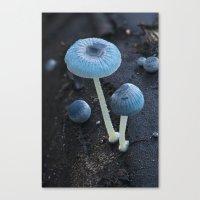 pixies Canvas Prints featuring Pixies Parasol (Mycena interrupta) by Clusterpod
