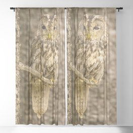 Perched Tawny Owl Sheer Curtain