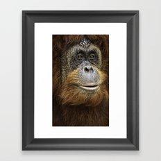 Orangutan Portrait Framed Art Print