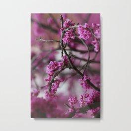 Purple Blossoms Metal Print