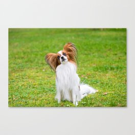 Portrait of a papillon purebreed dog sitting on the grass Canvas Print