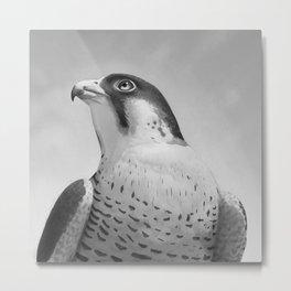 Falco Metal Print